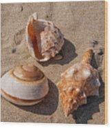 Seashells On The Sand Wood Print