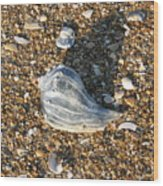 Seashells On The Seashore Wood Print