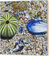 Seashore Colors Wood Print