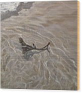 Seashore Reflections Wood Print