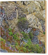 Seaside Cliff Garden In Point Lobos State Reserve Near Monterey-california  Wood Print
