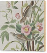 Seaside Finch Wood Print