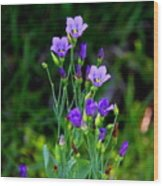 Seaside Gentian Wildflower  Wood Print
