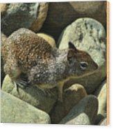 Seaside Ground Squirrel Wood Print