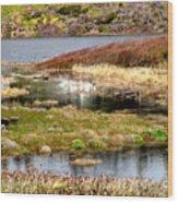Seaside Marsh Wood Print