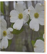Season Of Dogwood Wood Print