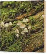 Seasonal Signs Wood Print