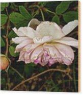 Seasoned Beauty Wood Print