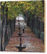 Seasons - Pathway Wood Print