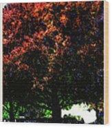 Seattle Chateau Ste Michelle Tree Wood Print
