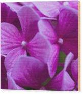 Seattle Summer Flowers Wood Print