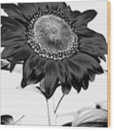 Seattle Sunflower Bw Invert - Stronger Wood Print