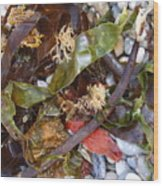 Seaweed And Pebbles Wood Print
