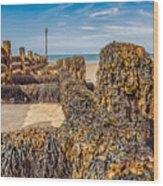 Seaweed Covered Wood Print