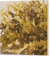 Seaweed In The Sand Wood Print