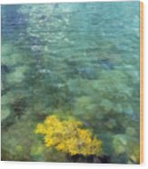Seaweed Wood Print