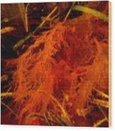 Seaweed Mistress Wood Print