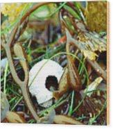 Seaweed Monster Wood Print