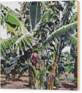 Second Bananas Wood Print