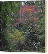 Secret Of The Forest Wood Print