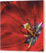 Secret Of The Red Tulip Wood Print