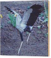 Secretary Bird Running Wood Print