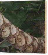 Secrets Of The Jungle Wood Print