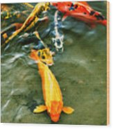 Secrets Of The Wild Koi 11 Wood Print