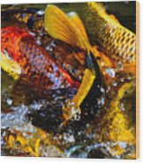 Secrets Of The Wild Koi 2 Wood Print