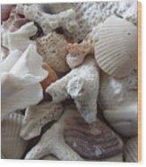 See Sea Shells Fom The Sea Wood Print