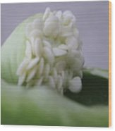 Seed Ala Bell Wood Print