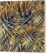 Seed Burr Wood Print
