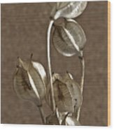 Seed Pods Macro Wood Print