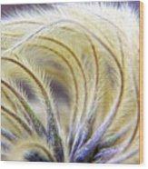 Seedheads Wood Print