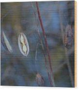 Seeds In A Pod Dark Wood Print