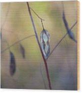 Seeds In A Pod Light Wood Print