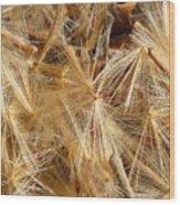 Seeds Of Winter Wood Print