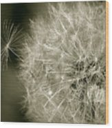 Seedy Dandelion Wood Print