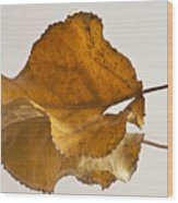 Seeing Double Autumn Leaf  Wood Print
