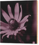 Seeing Life Through Rose-colored Glasses Wood Print