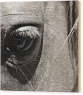 Stillness In The Eye Of A Horse Wood Print