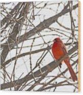 Seeing Red - Northern Cardinal - Cardinalis Cardinalis Wood Print