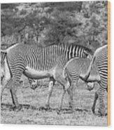 Seeing Stripes Wood Print