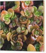 Seeing Succulents Wood Print
