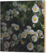Seeking Sun Wood Print