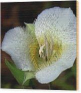 Sego Lily Wood Print