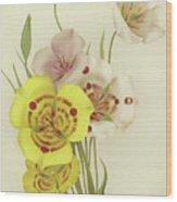 Sego Lily   Calochortus Wood Print
