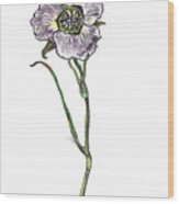 Sego Lily Field Sketch Wood Print
