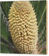 Sago Palm Flower Wood Print