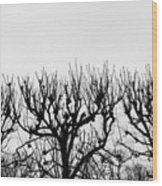 Seine River Trees Wood Print